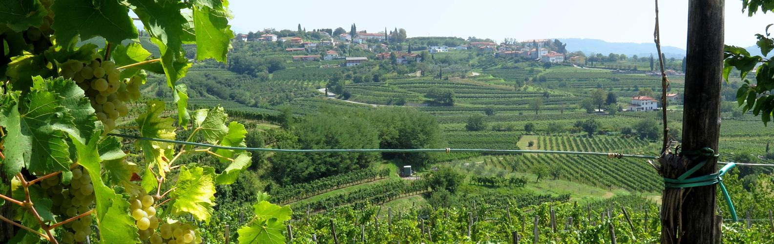 Brda wijnregio in Slovenië; bron Mijn Slovenie