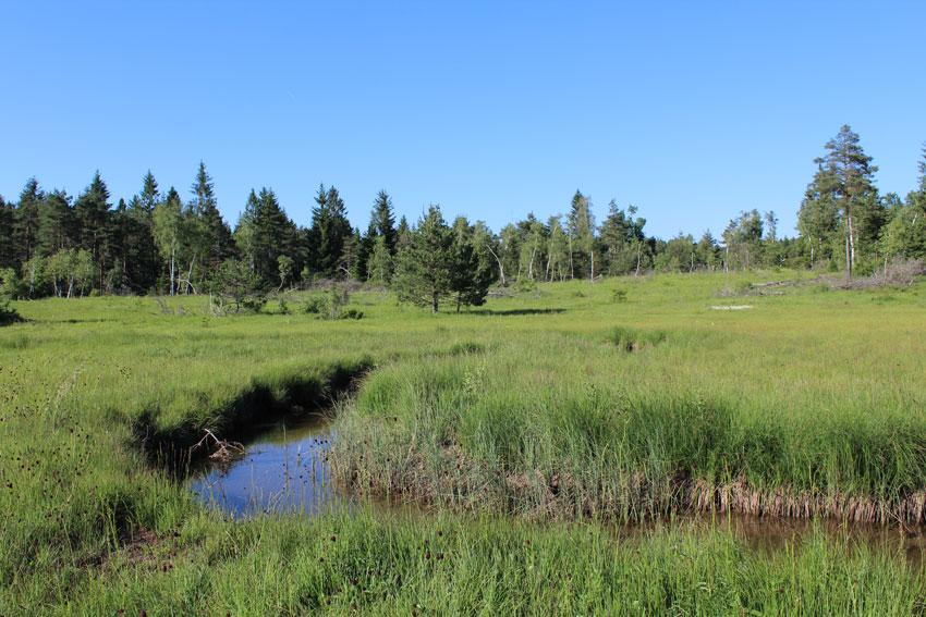 cerknisko lake, bron MijnSlovenie