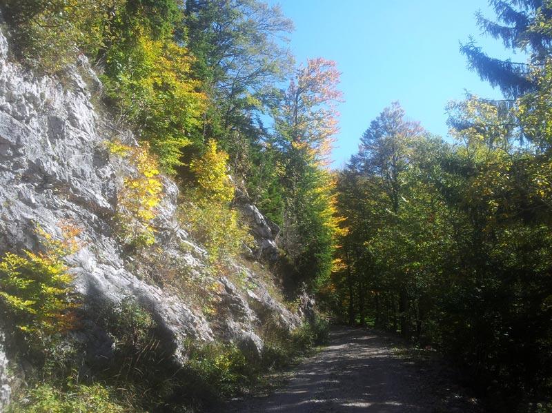 kleurlijk, wandelen door de bossen van Masun, bron EVAdinarica, mijnslovenie