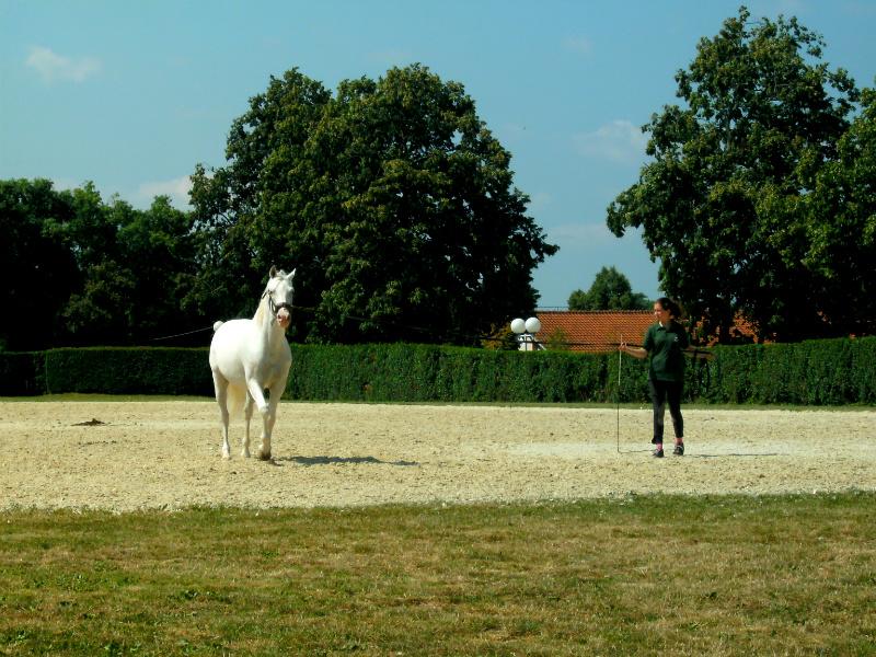 Lippizaner paard, J. van Zoest, mijn slovenië