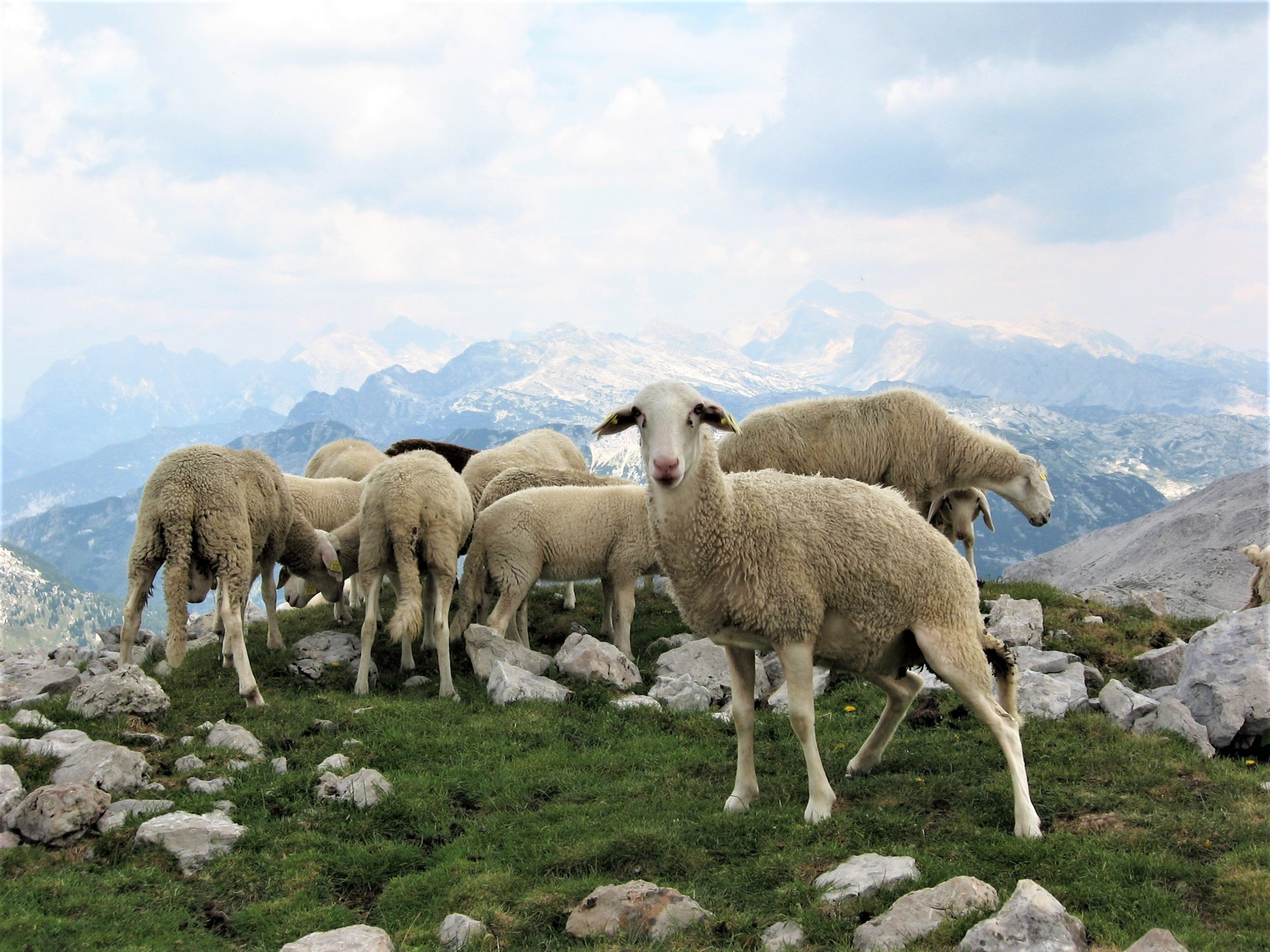Hiken Slovenie Triglav Nationaal Park