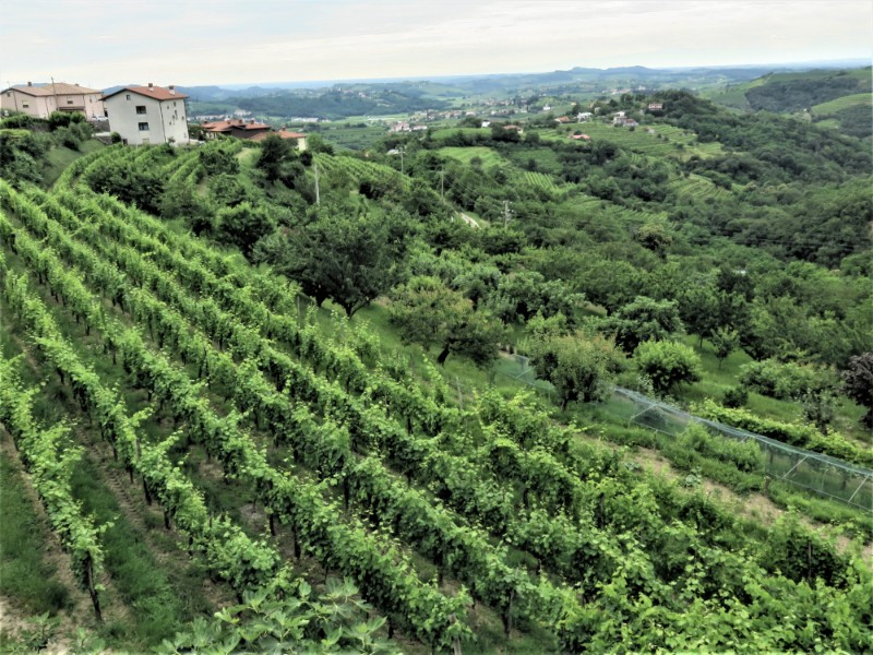 View From Smartno Brda vineyards