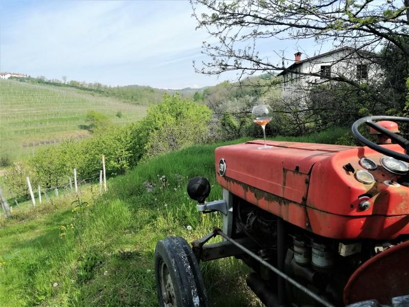 Wandelvakantie Slovenie Brda Wijngaarden (6) wijn