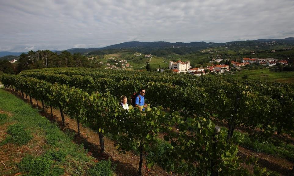 Wandelen educatief Brda wijngaarden vakantie Slovenië wandelvakantie