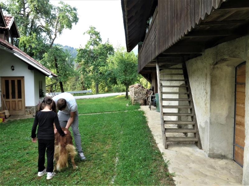 accommodatie waar hond kan verblijven in Slovenie