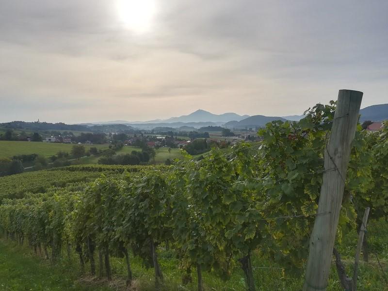 Skalce wijnvelden