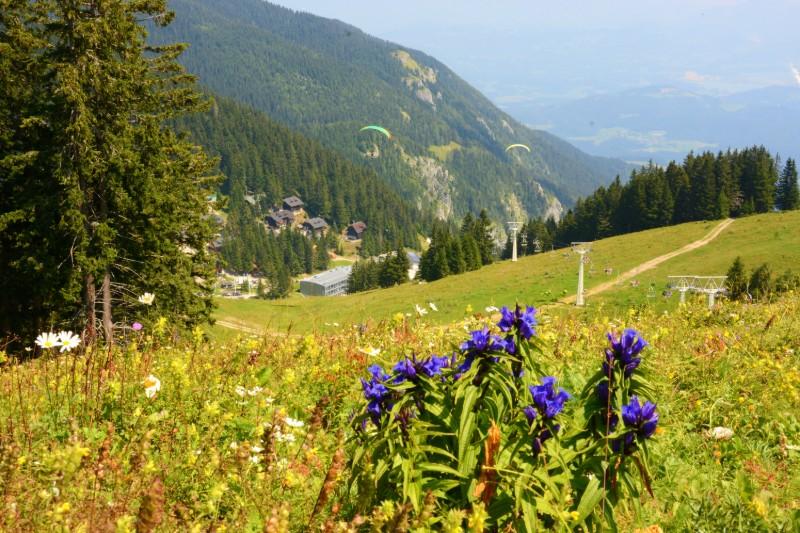 Slovenie accommodatie in de bergen Golte