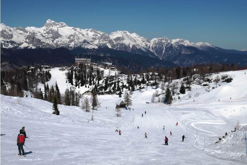 Vogel - skiiing 2
