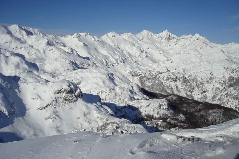 Vogel - snow