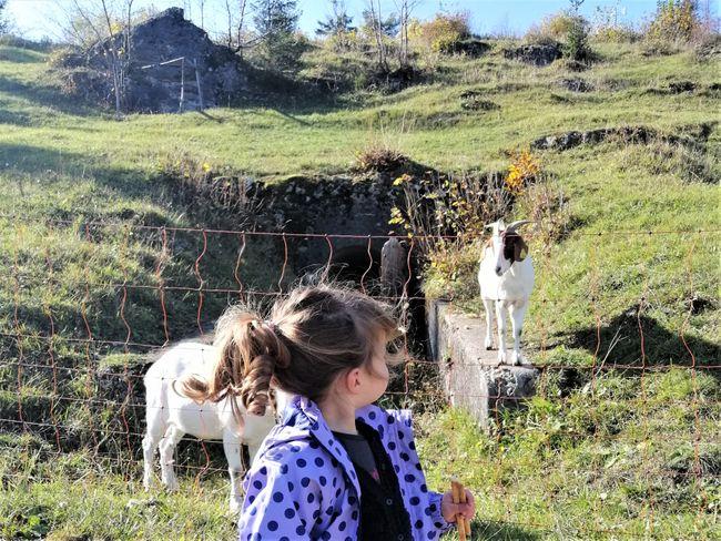 geiten herfstvakantie Slovenie