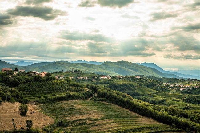 wijngaarden in Brda
