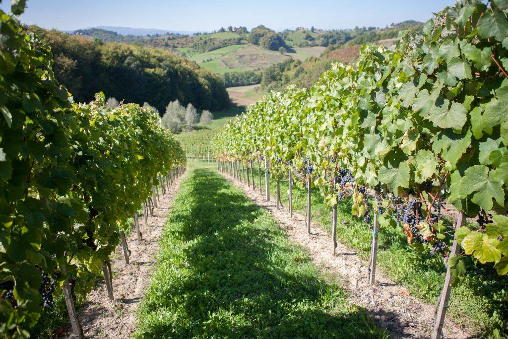 wijnvelden slovenie