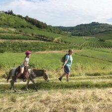Wandelen met een ezel in Slovenie, regio Brda, 1